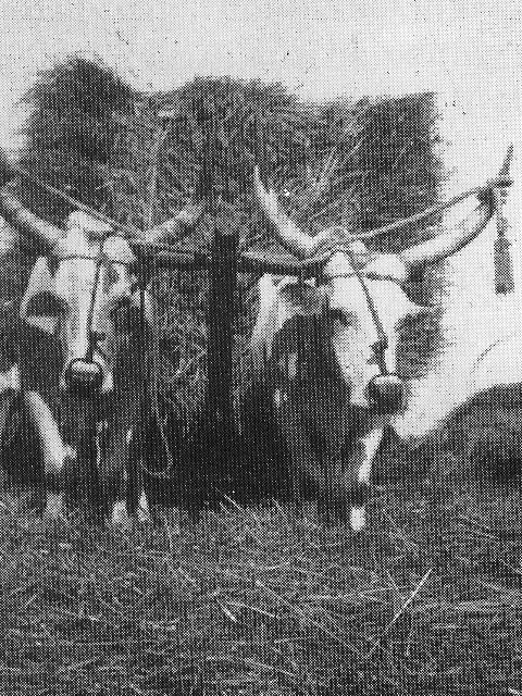 mietitura1-1933-web